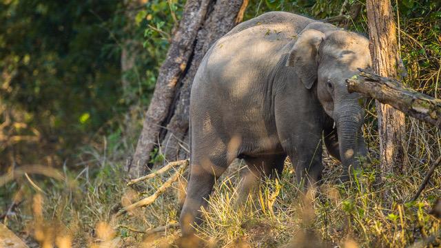 ELEPHANT IN CORBETT